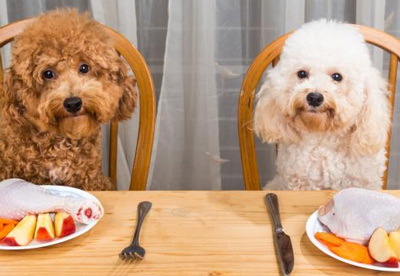 The Complete Guide to Feeding Your Labradoodle a Nutritious and Organic Diet