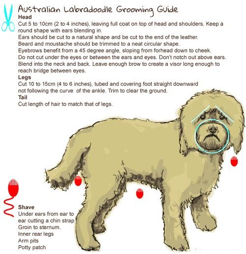 grooming-guide