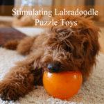 stimualting-labradoodle-puzzle-toys