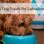 best-dog-foods-for-labradoodle